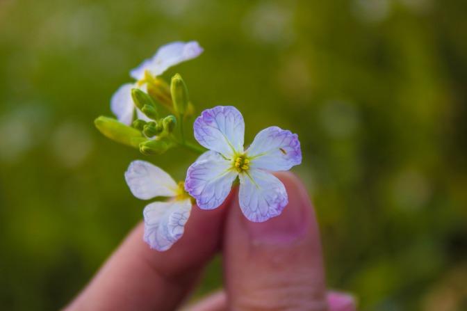 You know I always take wild flowers. Haha.
